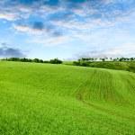 Красивый весенний пейзаж и пасмурное небо — Стоковое фото #13340926