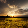 Sunset and agricultural field — Stock Photo
