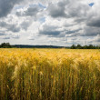 Wheaten field and cloudy sky — Stock Photo