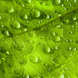Green leaf texture and drop — Stock Photo