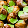 Edible snails — Stock Photo