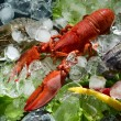 Shrimps and lobster with an ice — Stock Photo #13341245