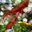 Shrimps and lobster with an ice — Stock Photo #13341246