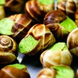 Edible snails — Stock fotografie