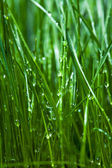 Gras- and -drop — Stockfoto