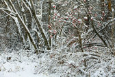 Winter day. Trees in a snow — Stock Photo