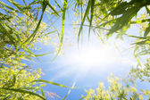 Grass on a meadow and beams of the morning sun — Stock Photo