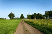Country road through the meadow — Stock Photo