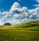 Mooie zomerse landschap en het beslag van koeien — Stockfoto
