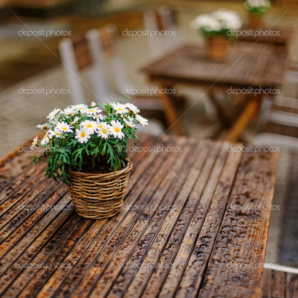 Chamomile in a busket on the table of a cafe — Stock Photo #12641564