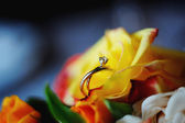 Wedding rings in a roses — Stock Photo