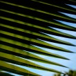 Palm tree leaf close up — Stock Photo #24570735