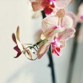 Anillos colgando de una hermosa flor — Foto de Stock