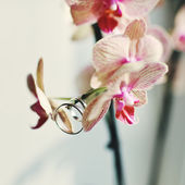 Rings hanging on a beautiful flower — Stock Photo