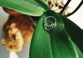 Pár snubních prstenů — Stock fotografie