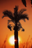 Sunset over palm tree — Stock Photo