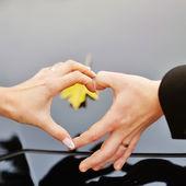 Hands. Love concept. — Stock Photo