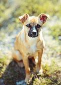 Bezaubernd kleiner hund. — Stockfoto