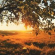 Beautiful sunset in summer field — Stock Photo