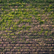 Bricks and moss — Foto Stock