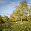 Hyde Park, London — Stock Photo #13316698