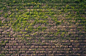 Bricks and moss — Stock Photo