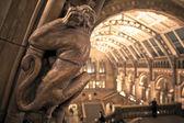 Interior of Natural History Museum, London. — Stock Photo