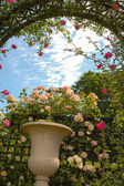 Rose garden of L'Hay-les-Roses — Stock Photo