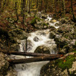 Stream in the forest with fallen trees. Autumn. Slovenia. Triglav national - Stock Photo