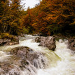 River in the forest with rapids. Autumn. Slovenia. Triglav national park — Stock Photo
