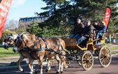 Paris horse parade — Stock Photo