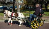 Pony at Paris horse parade — Stock Photo