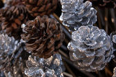 Silvered and natural pine cones on stick. Festive Christmas decoration background. — Stock Photo