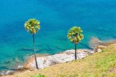 Phuket adası palmiye ağaçları — Stok fotoğraf