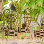 Hanging planter — Stock Photo