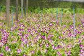 Orchid Garden — Stock Photo