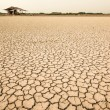 The dry earth — Stockfoto