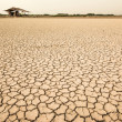 Stockfoto: The dry earth