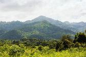 Tropical rainforest,Khao Yai National Park Thailand — Foto Stock