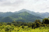 Tropical rainforest,Khao Yai National Park Thailand — Stock Photo