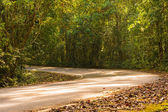 Road in tropical rainforests,Khao Yai National Park Thailand — Stock Photo