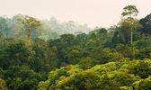Tropical rainforest,Khao Yai National Park Thailand — Stock Photo