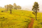 Green meadow,Khao Yai National Park Thailand — Stock Photo