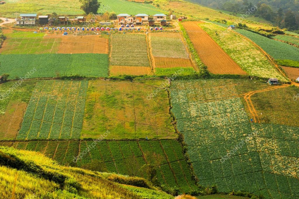 Fattoria di corbezzolo sulla collina in phu hin rong kla for Aprire piani di fattoria