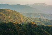 Tropical rainforest,in Phu Hin Rong Kla National Park Phetchabun — Stock Photo