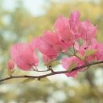 bello astratto sfondo floreale con fiori rosa. confine doppie — Foto Stock #42998569