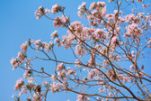 Background with pink spring blossoms. — Stok fotoğraf