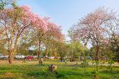 Bangkok - FEBRUARY 21 : Spring pink flower in Phutamonthon on FE — Stock fotografie