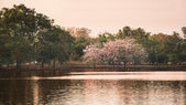 Parku a jezera — Stock fotografie
