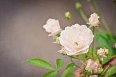 Foto kvetoucí strom brunch s bílými květy — Stock fotografie